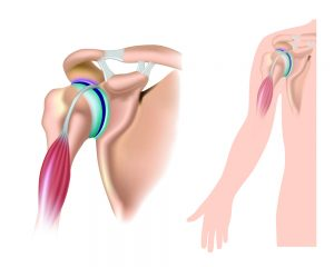 Illustration of shoulder anatomy